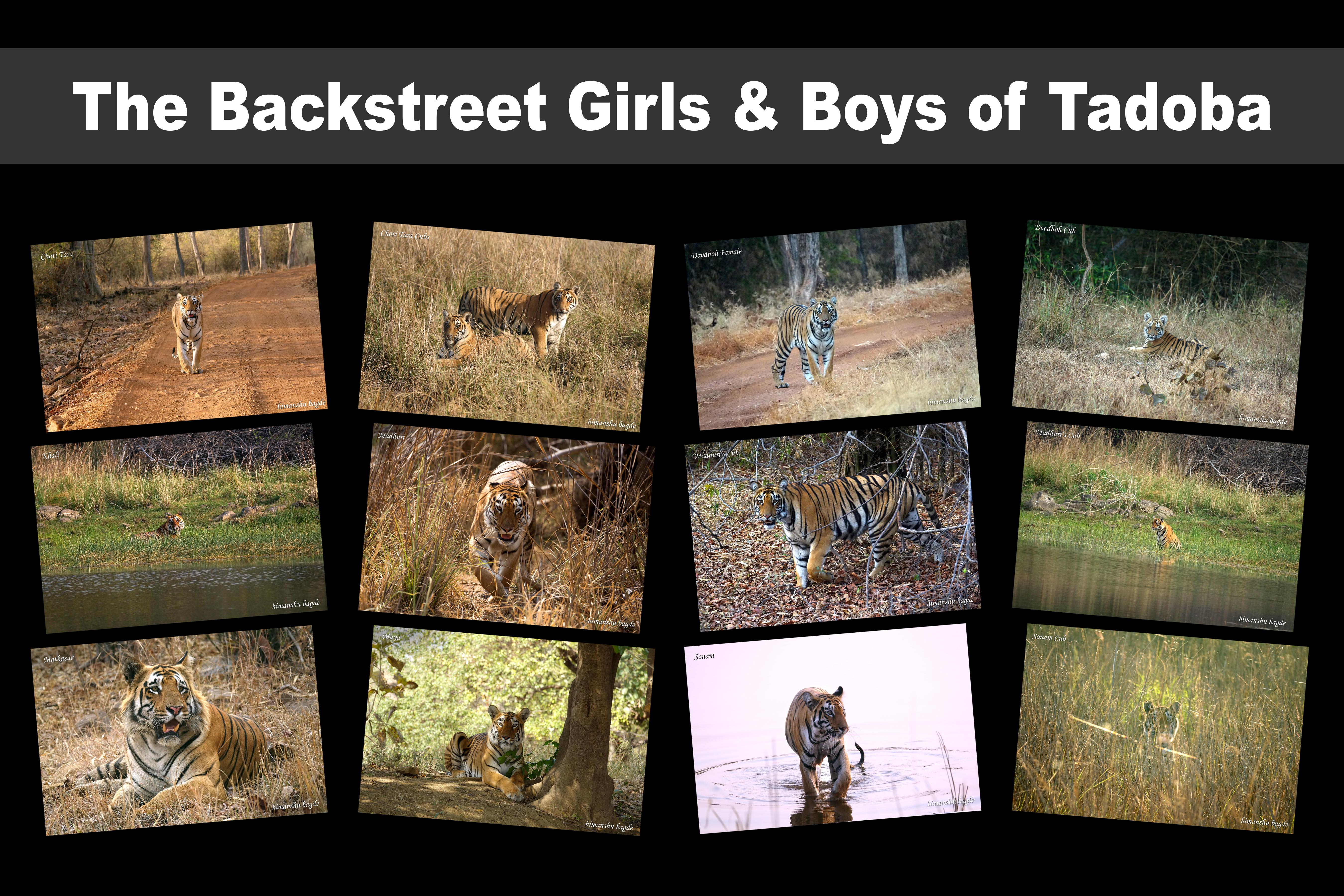 The Backstreet Girls & Boys of Tadoba
